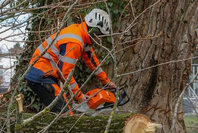 Obligation d'abattre un arbre : une nuisance pour le voisinage