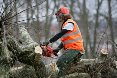 Quelle réglementation pour l'abattage d'arbres entre voisin ?