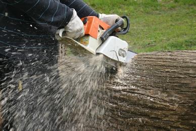 Quand faire l'élagage d'un arbre ?