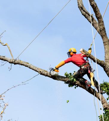 Quelles sont les différences entre abattage et élagage d'arbres ?