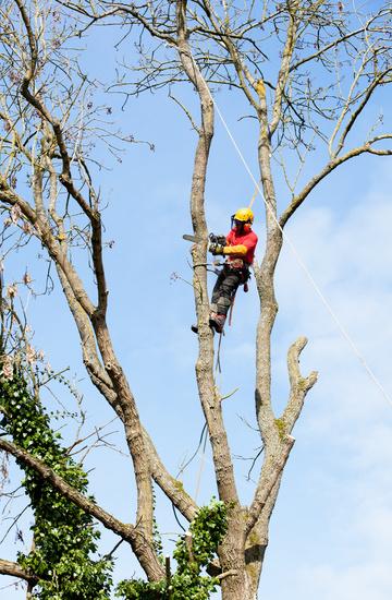 Démontage de l'arbre, travaux sur cordes et griffes